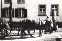 August Reidenbach mit Kuhgespann in der Vordergasse, vor dem Haus Heß