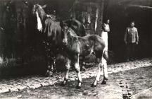 Stute mit Fohlen bei Rudolf Hoffmann