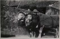 Reinhard Dann mit dem Ochsengespann