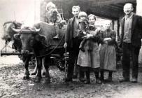 Familie Lamb und Maurer mit Ochsengespann Von li Renate, Otto, Elfriede (Kind), Hilda Lamb, Berta und Adam Maurer