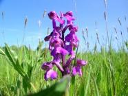 Orchideen rund um Bärweiler