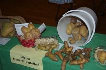 Lob der krummen Kartoffel