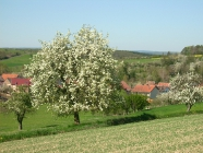 Bilder aus Bärweiler 11